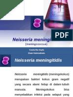 Ppt N.meningitidis