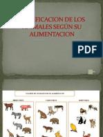 clasificaciondelosanimalessegnsualimentacion-120627185204-phpapp02
