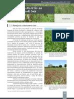 07 - Plantas Daninhas Na Cultura Da Soja_544858351
