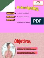 sistema respiratori