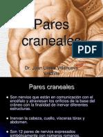 parescraneales-120925195627-phpapp02