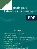Morfología y estructura