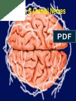 Brain & Cranial Nerves