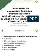macroinvertebrados
