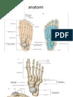 anatomi kaki