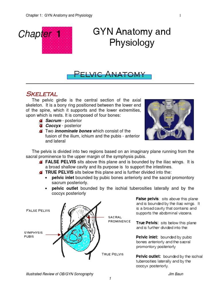 Pelvic Anatomy   Pelvis   Uterus