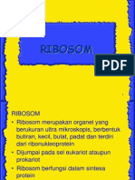 Ribosom and Protein Synthesis