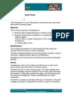 Fact Sheet Kookaburra