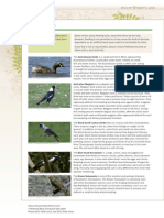 Rsp Factsheet Birds