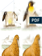 Animais Quentes e Frios - Imagens Desfocadas
