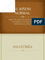 anatomiahistologiaembriologiayfisiologiarenal-100115040148-phpapp01