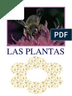 Las Plantas - JJ