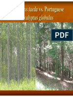 USA_Pinus_taeda vs Port Eucalyptus