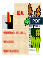 Morfología de Hoja