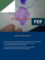tincindegram-120207123938-phpapp01