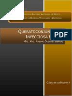 Queratoconjuntivitis_infecciosa_bovina