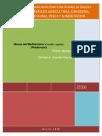 Mosca del mediterráneo-Ficha técnica-Dr. Remigio Guzmán-P v1-3