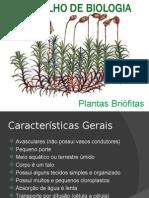 Plantas Briófitas