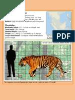 Valvert 2014_Ngandong Tiger Data Sheet
