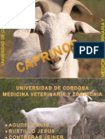 caprinos-110514092136-phpapp01