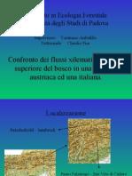 Confronto dei flussi xilematici al limite superiore del bosco in una stazione austriaca ed una italiana