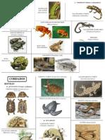 Visu Anfibios y Reptiles