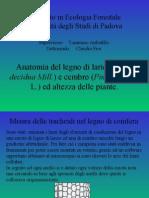 Anatomia del legno di larice (Larix decidua Mill.) e cembro (Pinus cembra L.) ed altezza delle piante