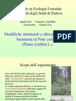 Modifiche strutturali e allocazione della biomassa in Pino cembro(Pinus cembra L.)