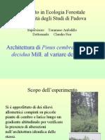 Architettura di Pinus cembra L. e Larix decidua Mill. al variare della quota