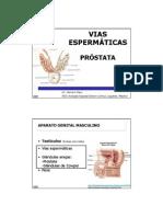 2013.Tema 72.Vias Espermaticas.pdf.Blanco