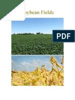 Soybean Combine Harvester