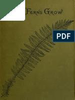 How Ferns Grow 1906 s Los