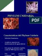 Phylum Cnidaria c4