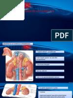 Anatomia y Fisiologia de Las Glandulas Suprarrenales