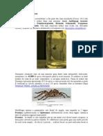 Paianjenii Sau Araneae