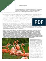 Pasarile Flamingo