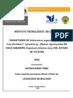 PARASITOIDES DE Anthonomus eugenii (Coleoptera- Curculionidae) Y  Lyriomiza sp.  (Diptera- Agromyzidae) EN CHILE HABANERO (Capsicum chinense Jacq.) DEL ESTADO DE YUCATÁN.pdf