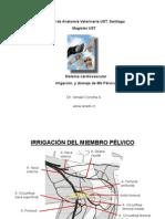 Irrig MbPelvico canino 005-for PDF.pdf