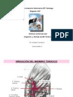 Irrig MbToracico canino 004 -for PDF___.pdf