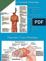 Anatomy Digestive