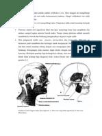 Otot Utama Dari Mulut Adalah Adalah Orbikularis Oris