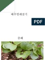 배추벌레잡기.pptx