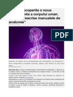 A Fost Descoperita o Noua Componenta a Corpului Uman. Trebuie Rescrise Manualele de Anatomie