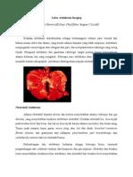 Jurnal Radiologi TiGiBaMi
