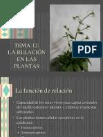 12_relacion_plantas