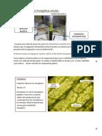Mini Manual de Bio (1)