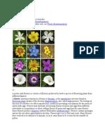 (179751155) Flower