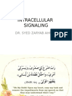 MBBS intracellular signaling