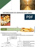 METABOLISMO DE AMINOÁCIDOS LIBRES.pptx