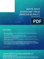 White Spot Syndrome Virus (Mancha Blanca )